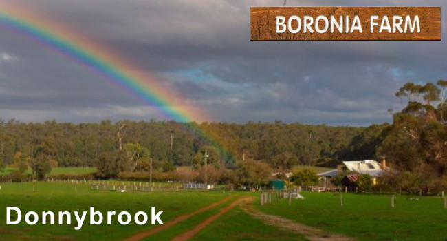 boronia farm donnybrook